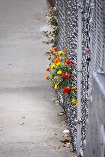 Colourful Wabisabi Fence Plant Flower Flowering Plant No People Day Nature Growth Outdoors Fragility Vulnerability