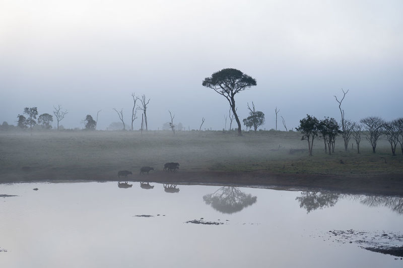Africa Fog Lake Plant Reflection Tree Water Waterfront