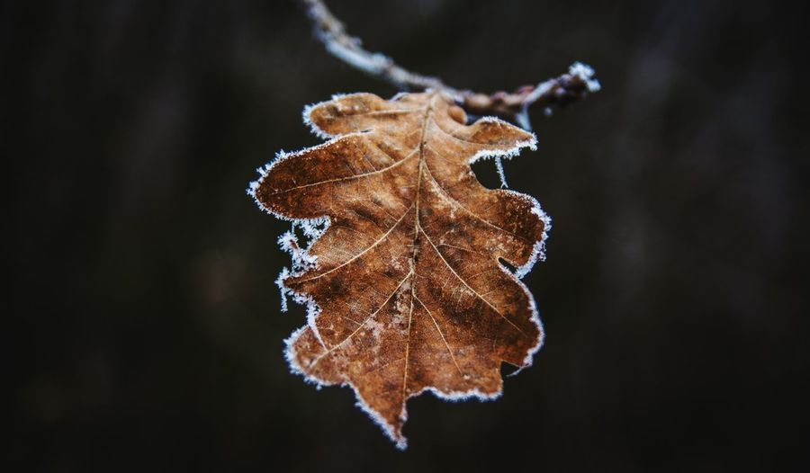 Nature Close-up Change Leaf No People Beauty In Nature Day Outdoors Nature Photography Nature_collection Naturelovers Cold Cold Temperature Cold Days Cold Winter ❄⛄ Cold Weather Ice Kerber Forest Leaf 🍂 Autumn Colors Autumn