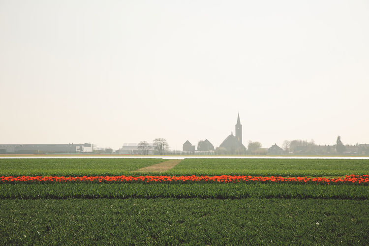 Agriculture Beauty In Nature Clear Sky Copy Space Day Field Field Fields Flower Flowers Freshness Growth Landscape Nature Netherlands No People Outdoors Rural Scene Silhouette Sky Spring Tulips