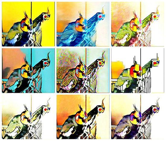 Calopsitas Taking Photos Hello World Relaxing EyeEm Edits EyeEm Best Shots Eyeem Psychedelic Psychedelic✌❤ Psychedelicart Nice Picture 😉👌 EyeEm Best Edits Hello ❤ Art Design Calopsitte Calopcita Calopsita Calopsite My Calopsitas