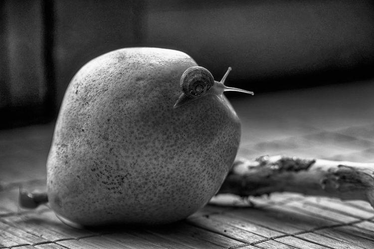 Business Composition Snail Animal Animal Themes Art Backgrounds Close-up Day Design Element Focus On Foreground Food Food And Drink Freshness Fruit Gastropod Healthy Eating Ideas Indoors  Monochrome Nature No People One Animal Ripe Selective Focus Snail Snail Collection Snail Photography Snail ❤ Snails Snailshell Snail🐌 Still Life Table Wallapper Wellbeing
