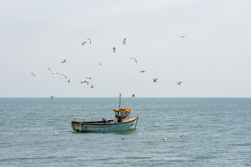 A small traditional fishing boat out in a calm sea is swarmed by gulls and seagulls. Animal Animal Themes Animal Wildlife Animals In The Wild Bird Fishing Boat Fishing Industry Flock Of Birds Flying Group Of Animals Horizon Horizon Over Water Large Group Of Animals Mode Of Transportation Nautical Vessel No People Outdoors Scenics - Nature Sea Seagull Sky Transportation Vertebrate Water Waterfront