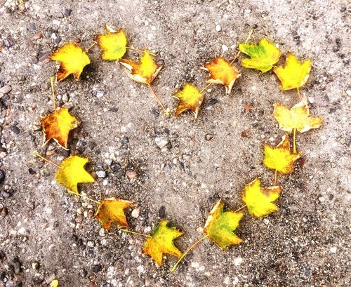 Autumn leaves sorted in the shape of a heart. Leaf High Angle View Nature No People Yellow Outdoors Fragility Autumn Leaves Autumn Autumn Colors Autumn Leafs Heart Shape Heart Pavement Road Season  Seasonal