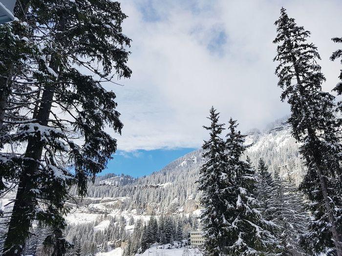 Snow Snowcapped