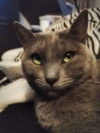 That's what I call an Attitude. Cats Cat Catsagram