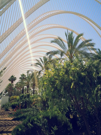 Valencia Day Frond Growth Nature No People Outdoors Palm Tree Plant Tree