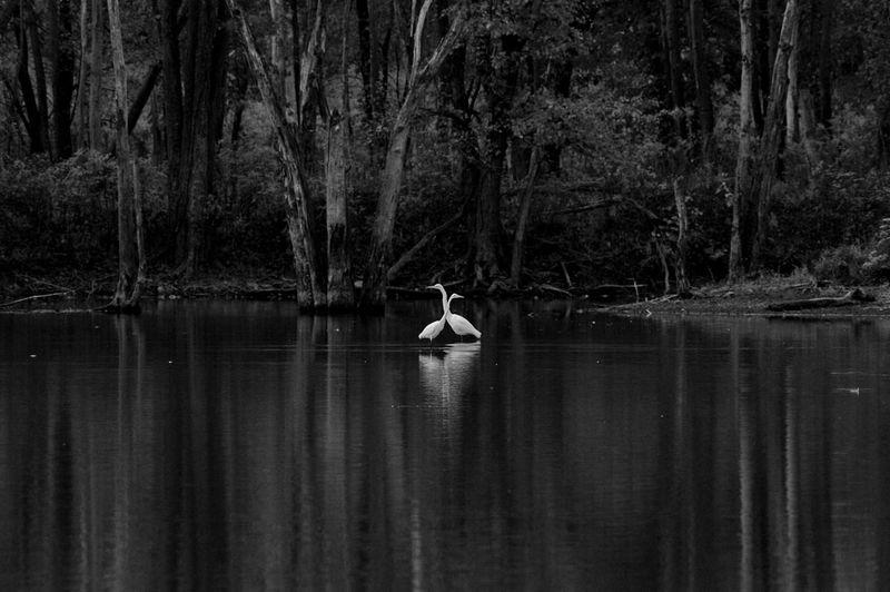 Egret Crossing