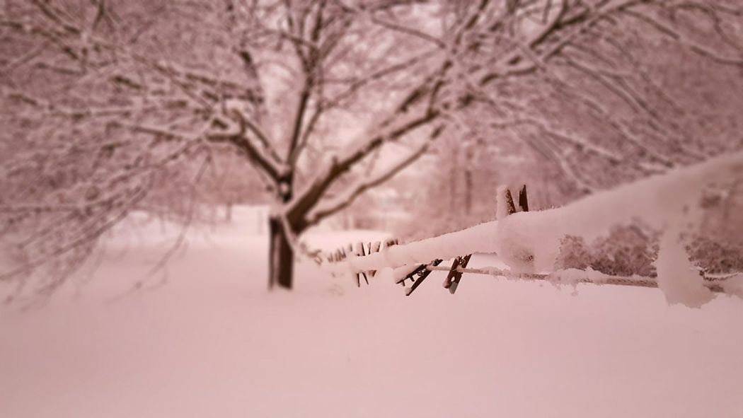 Snow-a-glo. Snow Covered Bare Tree TreeNo People Outdoors Backyard Photography Nature Snowy Pink Illumination Clothesline Snow Covered Landscape Beauty In Nature Focus On Foreground EyeEm Best Shots Millennial Pink