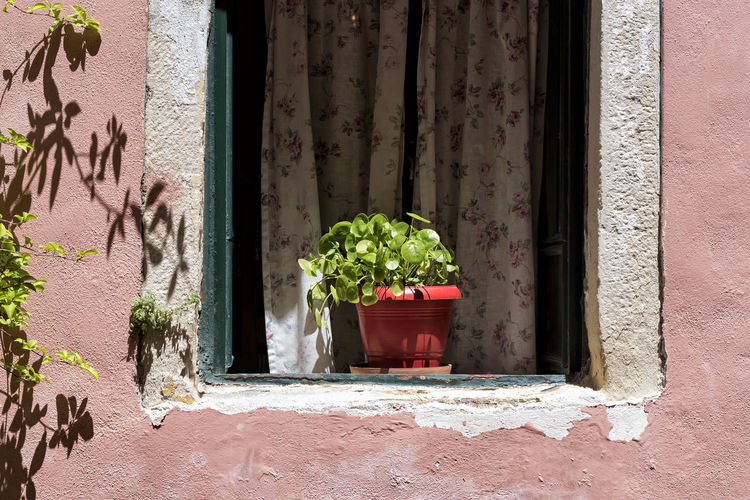 Potted Plant Plant Potted Plant Growth No People Nature Sunlight Red Flower Pot Building Exterior Day Outdoors Wall - Building Feature Window Beautiful Architecture Leaf Building Red Pot Pink Wall Rustic Old Weathered Aged