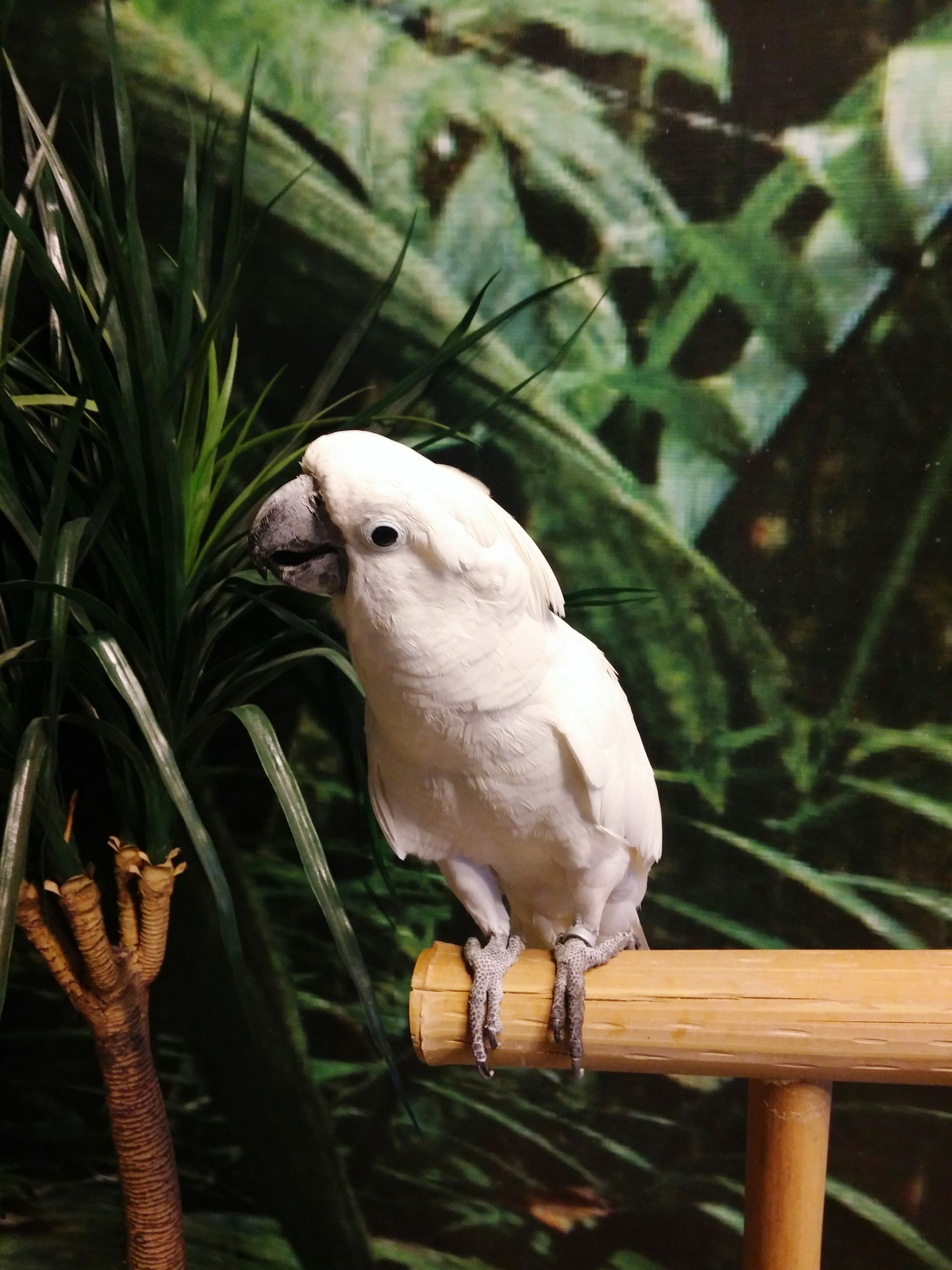 animal themes, one animal, animals in the wild, wildlife, bird, focus on foreground, perching, close-up, beak, side view, animal head, nature, looking away, full length, parrot, outdoors, zoology, vertebrate, no people, day