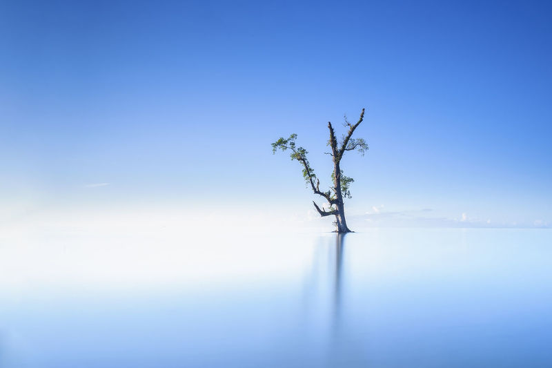 The Joy of Solitude Alone Asian  Loneliness Malaysia Truly Asia Relationship Tree Blue Empowering Isolation Joy Lahad Datu Lanscape Lonely Tree Peach Privacy Retirement Sabah Borneo Seascape Seclusion Single Tree Solitude Stresses Survival Survivor Wilderness