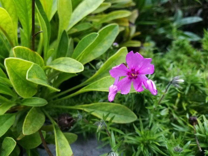 Flower Nature Beauty In Nature Freshness