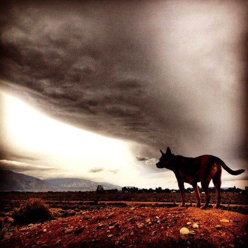 Dogs Dogs Of EyeEm Tallac IPhoneography Best EyeEm Shot Bestoftheday Haters Gonna Hate EyeEm Best Shots Back From The Dead Landscape Epic No Edit No Fun Iphone6s HERO EyeEm Gallery Vista Scenics Clouds And Sky Clouds Sky And Clouds Skyporn