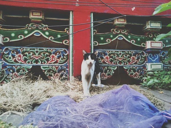 Cat Streetphotography Eyeem Meetup Taipei Animals Random