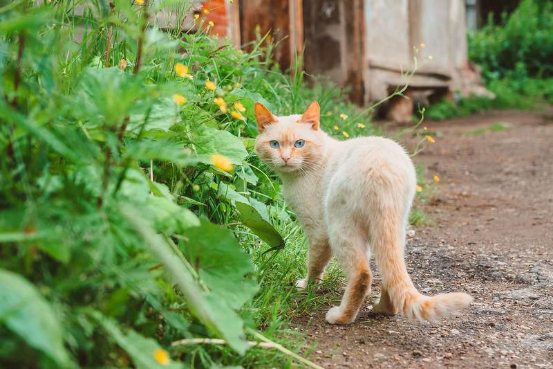 Portrait of ginger cat on field