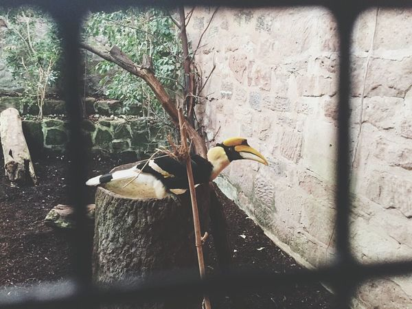 Day Out Chester Zoo Hornbill