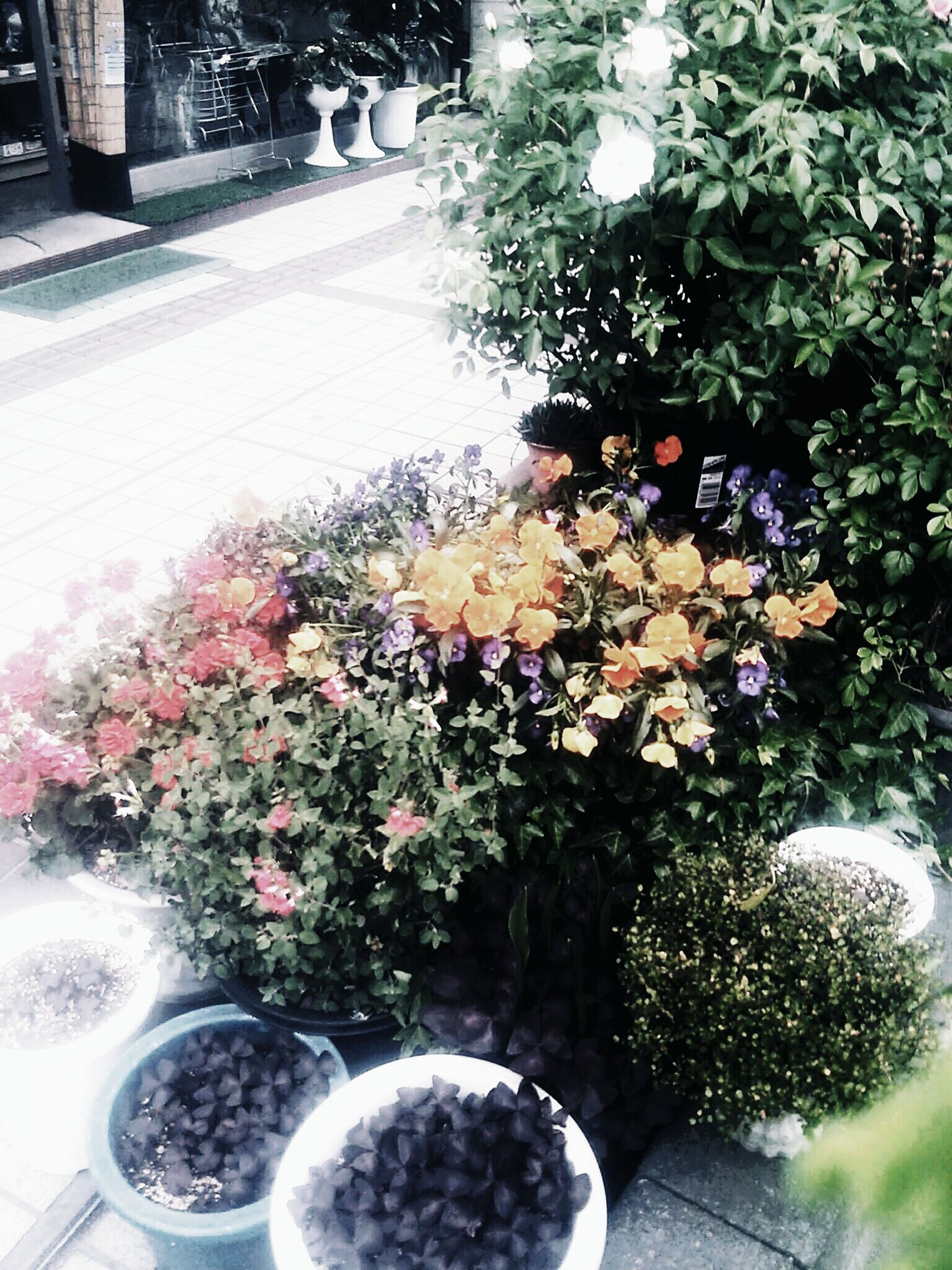 flower, plant, growth, potted plant, tree, freshness, high angle view, street, land vehicle, fragility, flower pot, outdoors, nature, city, building exterior, day, sunlight, no people, decoration, front or back yard