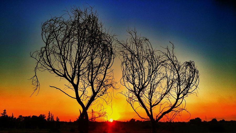 Sunset Nature Tree Twilight Libya Tripoli Libya Tajora First Eyeem Photo