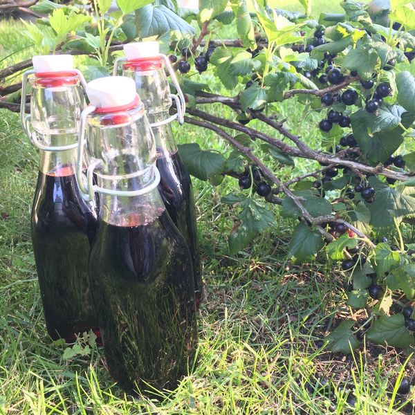 Food And Drink Bottle No People Day Growth Drink Refreshment Outdoors Green Color Plant Food Freshness Nature Fruit Healthy Eating Alcohol Grass Cassis Black Currants Black Currant Bush