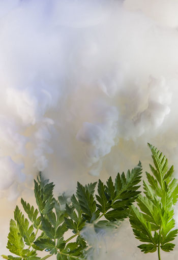 Digital composite image of trees and plants against sky
