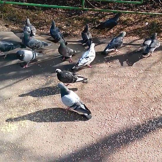 #birds #bird #instabirds #instabird #birdfeeding #feeding #pigeon #pigeons #sparrow #sparrows #2014 воробей Instabirds Bird Birdfeeding Birds воробьи Pigeons птички Sparrow кормимптиц Feeding  Sparrows Pigeon 2014 Instabird голуби голубь птица птичка птицы