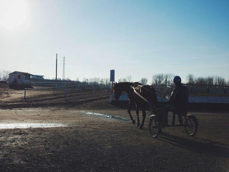 Sky Two People Togetherness Clear Sky Sunlight Adults Only Outdoors Bicycle Full Length Men Only Men People Adult Young Adult Leisure Activity Cycling Day Women Nature Beauty In Nature Horse Horse Riding Hippodrome Tongeren