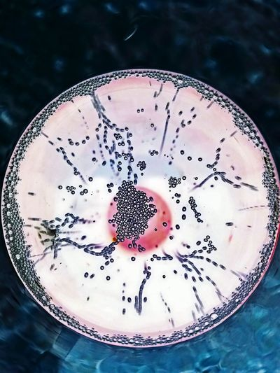 Cellular Photography of the Molecular kind. Molecular Food Molecularmixology Close-up Drink Sparkling Sparkling Champagne