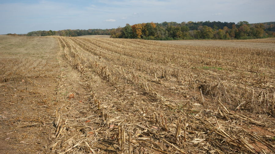 Field stubble against sky