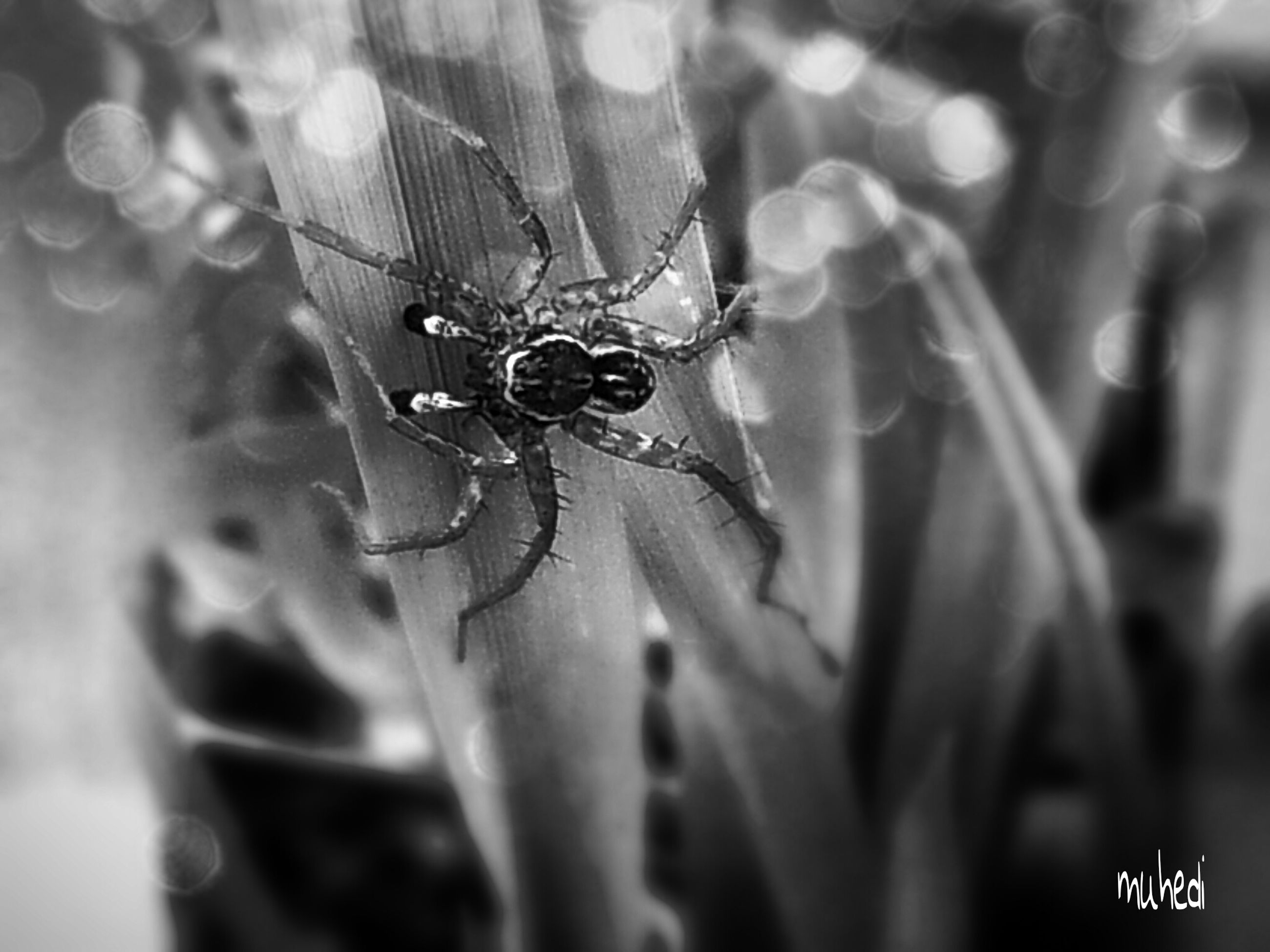 one animal, insect, close-up, animal themes, focus on foreground, selective focus, spider web, wildlife, animals in the wild, nature, spider, fragility, macro, day, leaf, outdoors, extreme close-up, no people, plant, natural pattern