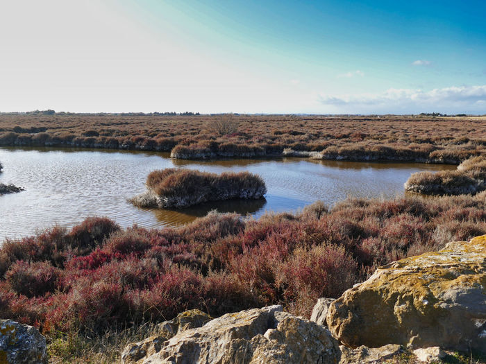 Marshland in winter in southern France - untouched nature Marshland  Winter France LanguedocRoussillon Land Nature Tranquility Reserve No People Loneliness Quiet Harmony Untouched Sky Water Remote Pure Beauty In Nature Tranquil Scene Scenics - Nature Landscape Outdoors