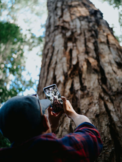 Low angle view of man photographing on tree trunk