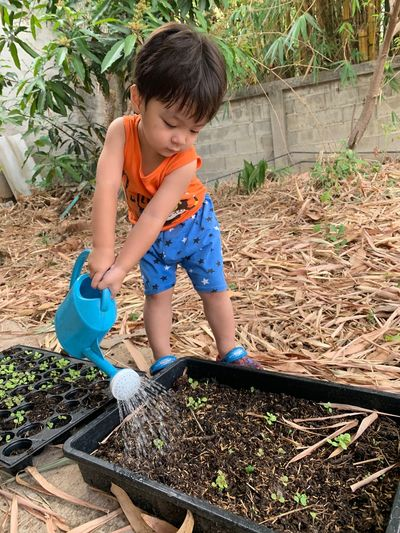 Child Childhood One Person Real People Front Or Back Yard Gardening Men Boys Casual Clothing Day Growth Nature Lifestyles Males  Full Length Plant Dirt Holding Outdoors Innocence Planting
