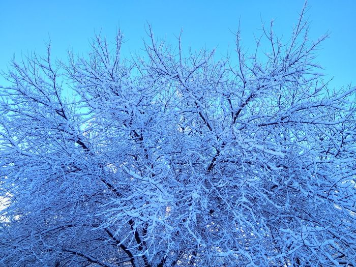 Зима зима иний снег Nature Beauty In Nature Blue Tree Tranquility No People Branch Winter Backgrounds Growth Flower Outdoors Day Cold Temperature Clear Sky Freshness Bare Tree Snow Sky Fragility Close-up