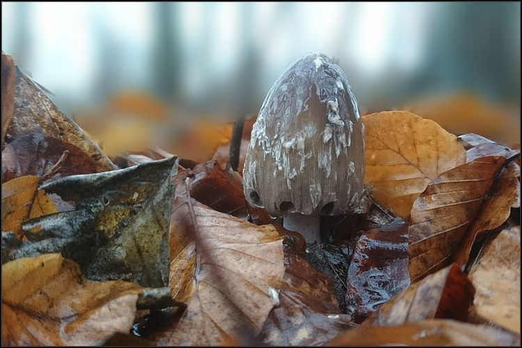 Vorsichtiger Blick... Focus On Foreground EyeEm Deutschland Philosophenwald Tintling Spechttintling Fungus 🍄 Dezember Smartphonephotography Sony Xperia Photography. Streamzoofamily No People Close-up Day