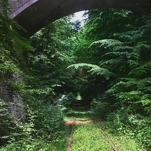 Dreisine Longway Schmilau Ratzeburg picofthedaypicofthemomentgreenforestschleswigholsteinWandertagschoolZeugnisseschienenbrückewald