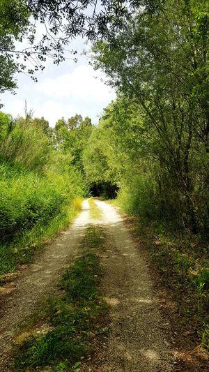 Natura Nature Green Sentiero Verde