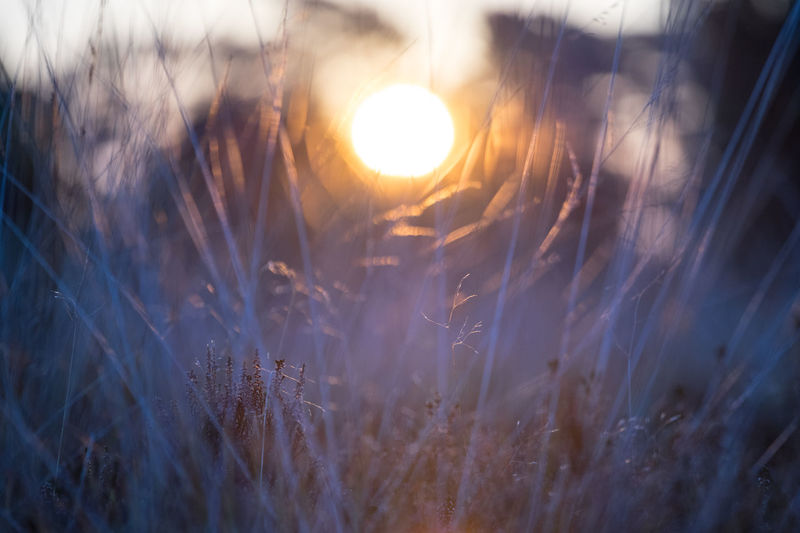 Sun through Grass Abstact Beauty In Nature Close-up Field Growth Land Lens Flare Nature Outdoors Plant Selective Focus Sky Sunlight Sunrise Sunset Tranquility