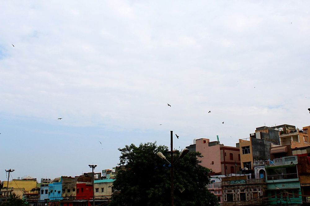 Delhi travel Cityscape Cloud - Sky Buildings OpenSkys Flock Of Birds Flying Afternoon Sky