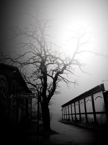 Blackandwhite Eye4black&white  Urban Nature Trees Urban Geometry Melancholic Landscapes Streetphotography Hugging A Tree Winter