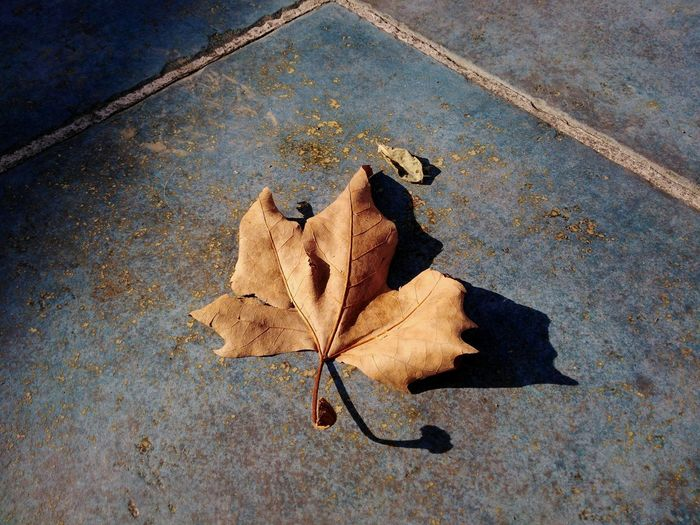 The leaf @tiziana_barricelli Fall Thankyou Thank You Eyeem Beauty In Ordinary Things Turquoise Brown Eye For Photography Eye4photography  Textures In Nature Artistic Photo Photography Detailphotography Still Life Leaf Autumn Close-up Fallen Leaf