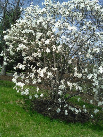Bucks County  White Nature Flowers
