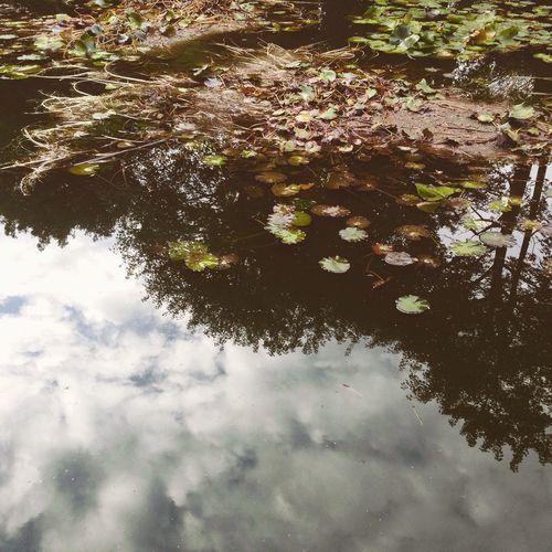 Gardening Lake water Botanical Botanical Gardens Photography Nature