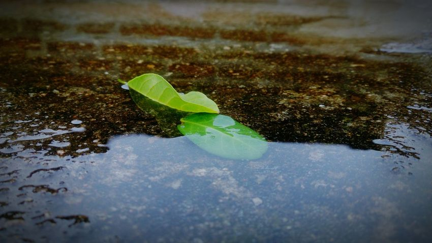 After The Rain Folhas Que Caem Chuva Things That Are Green Water Reflection_collection Enjoying Life
