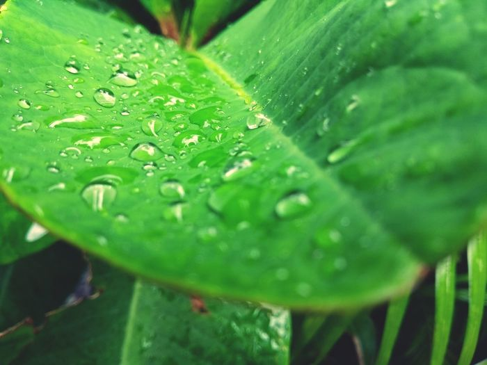 Neon Life Leaf Green Color Nature Drop Close-up Freshness Plant Selective Focus Water Wet Day No People Growth Beauty In Nature Outdoors Fragility