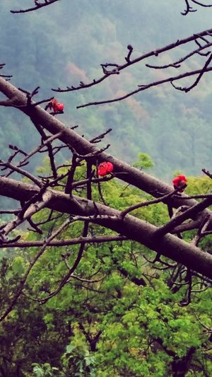After the rain in the Margalla Hills. First Eyeem Photo Pakistan Margalla Hills Mountains Rain Frame It! S Qi Travel Spring The Great Outdoors - 2016 EyeEm Awards Mist Novice Photography