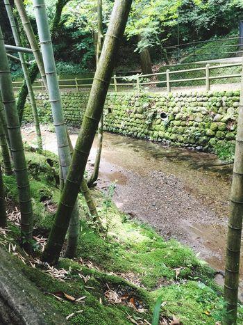 小川 River