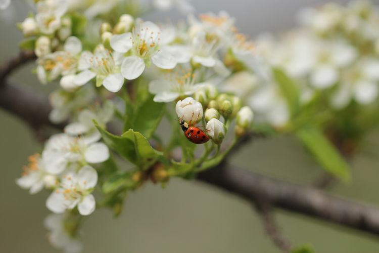 Blossom Bokeh