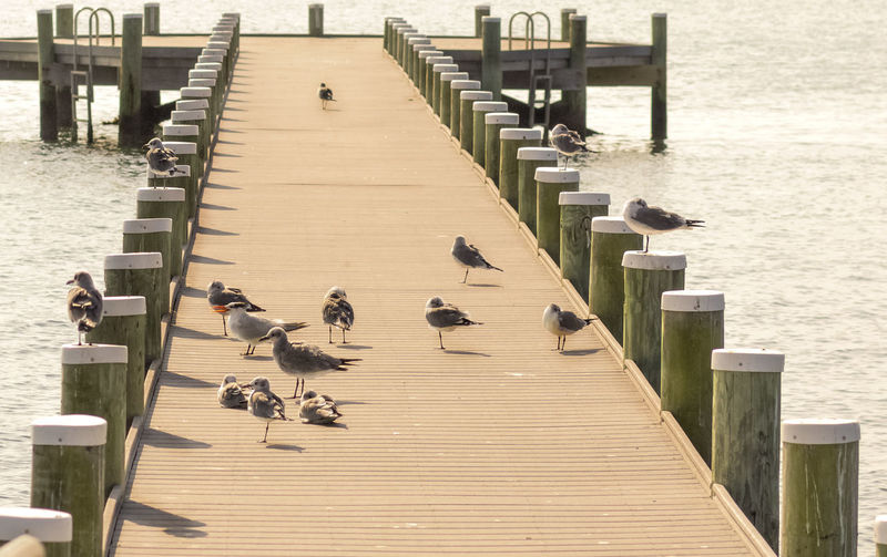 Day High Angle View In A Row Outdoors Sea Seagulls Seascape Water