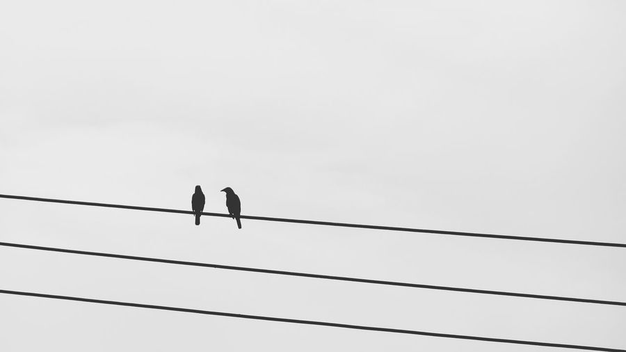 snapped these two while waiting for the bus. 🐦 Gear: Sony HX90V